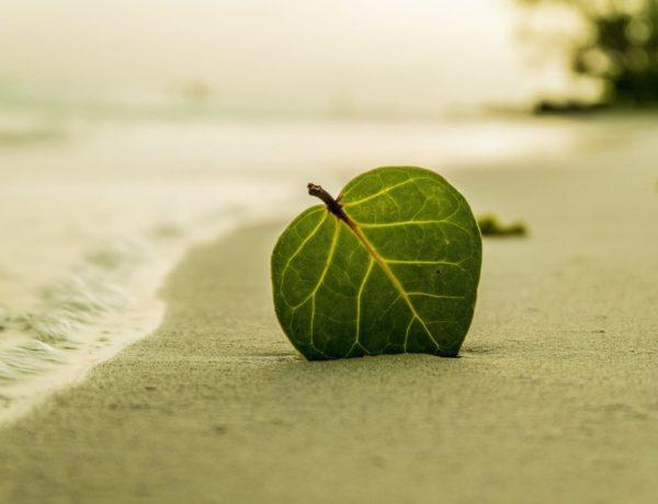 Quels produits naturels utiliser en Septembre ?