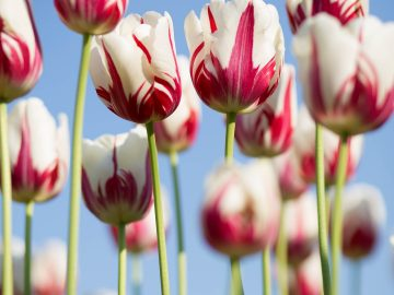 4 plantes au secours de vos allergies