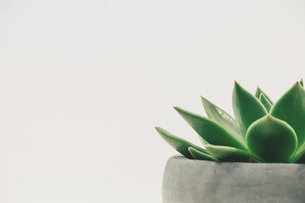 5 règles d'or du Feng Shui pour une vie zen