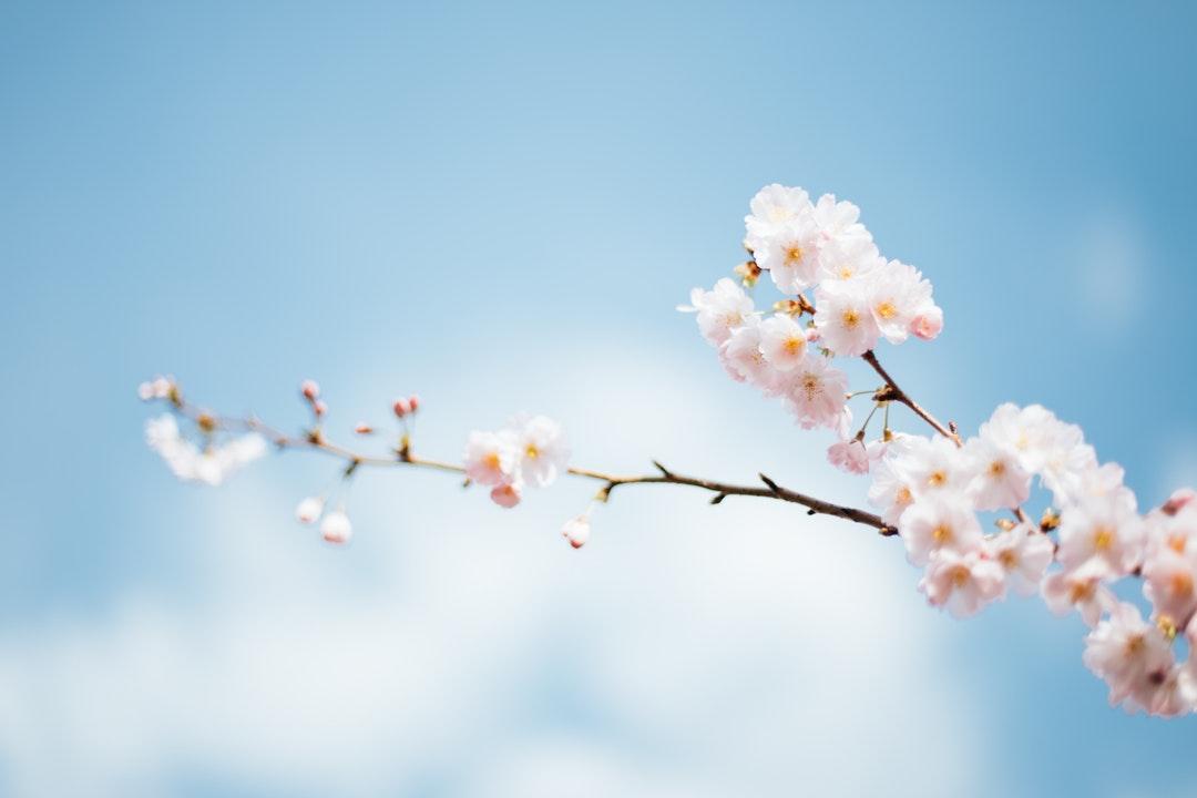 Printemps : se libérer des allergies saisonnières