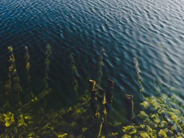 5 algues bonnes pour la santé