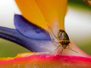 10 plantes pour éloigner les moustiques