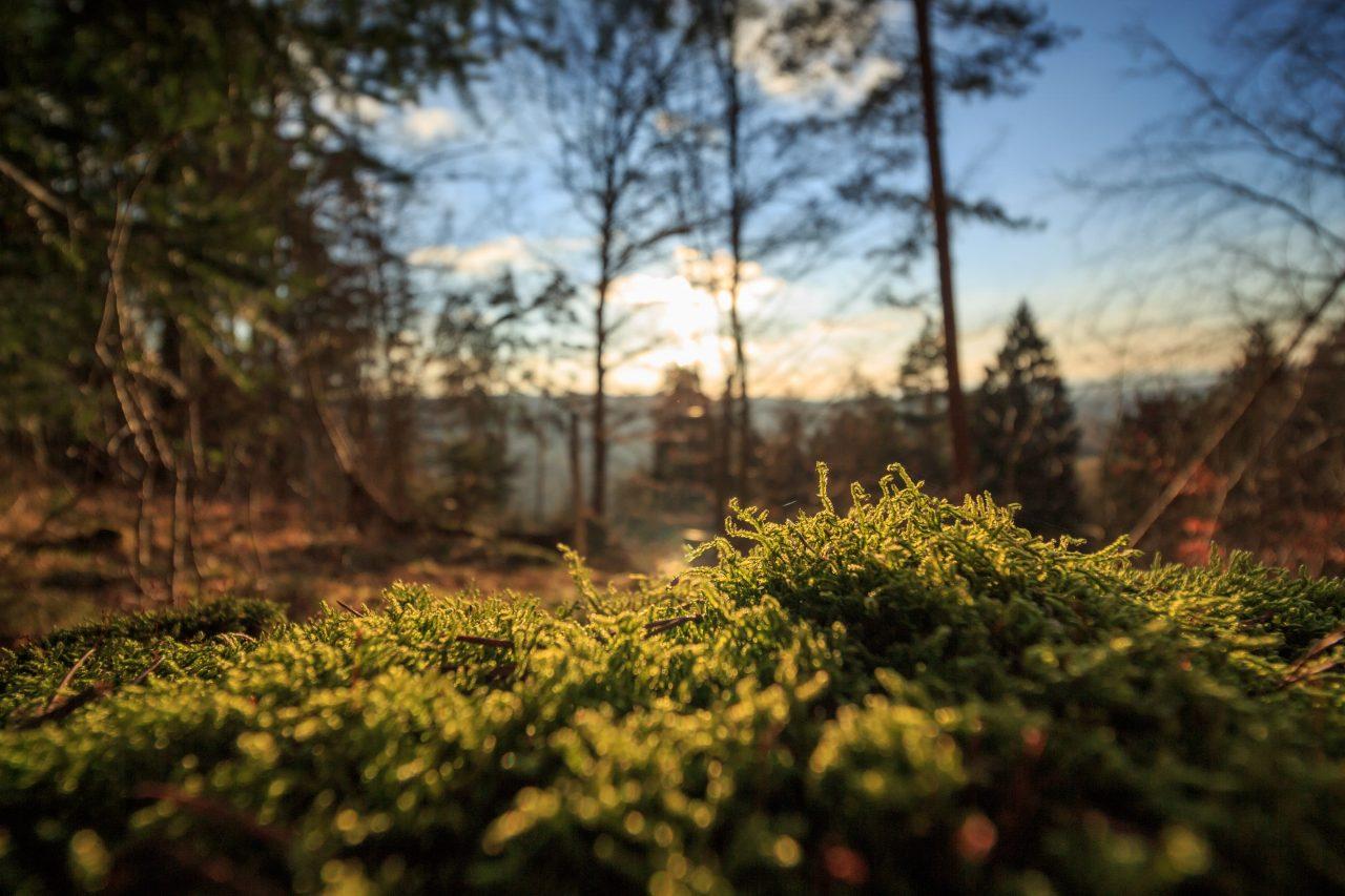 Pourquoi le contact avec la nature nous rend vraiment heureux ?