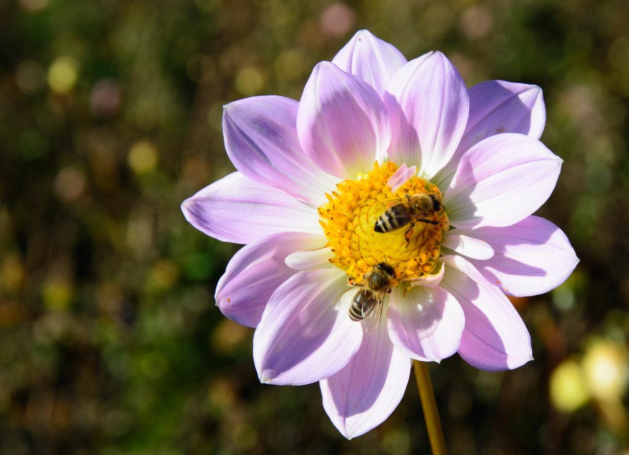 Connaissez-vous l'apithérapie ? Les trésors des abeilles pour renforcer l'organisme