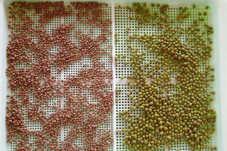Les graines germées : tous leurs bienfaits et comment les cultiver