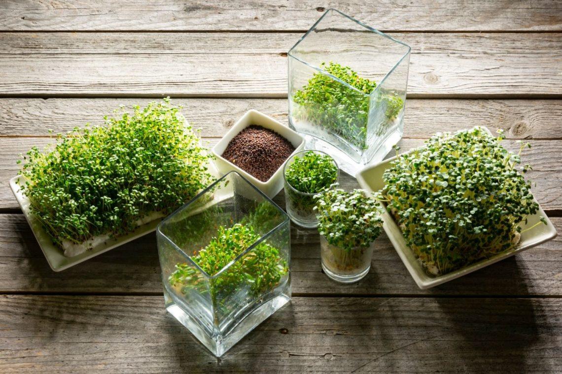L'art de cultiver et consommer les graines germées